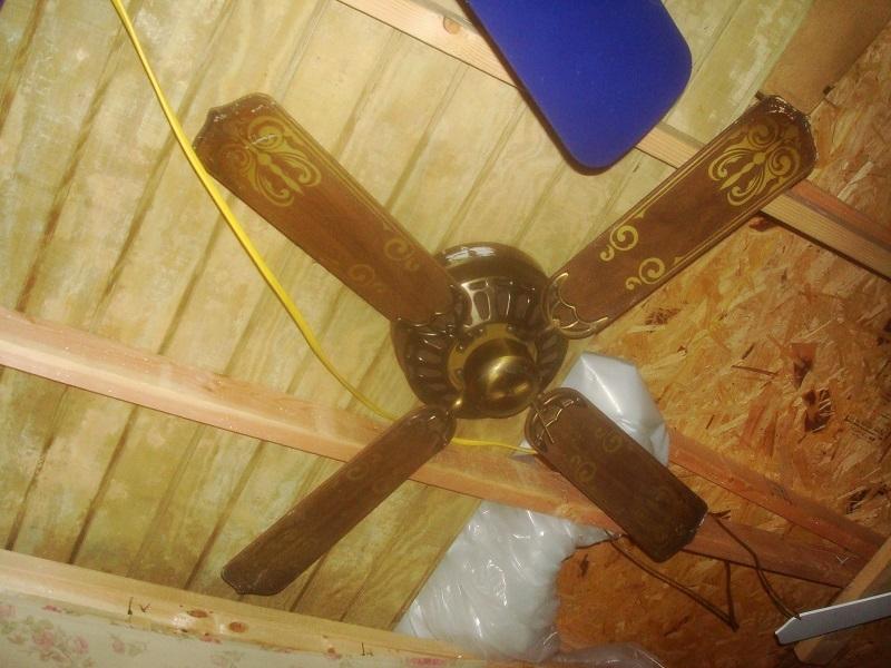 Ceiling Fan Images Evergo
